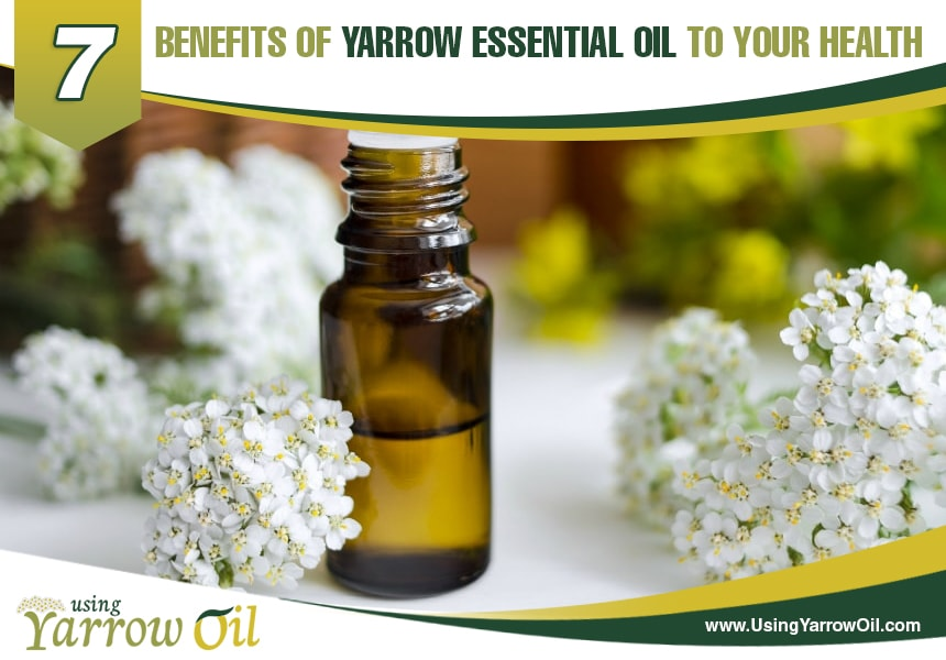 uses of yarrow oil