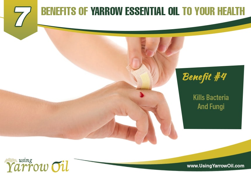 benefits of yarrow oil