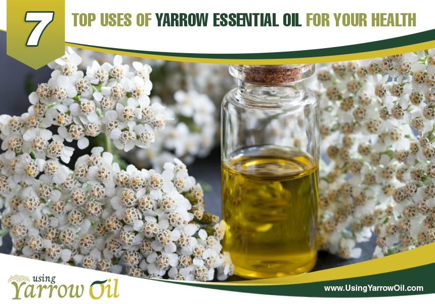 uses of yarrow oil