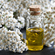 Top 7 Uses Of Yarrow Essential Oil For Your Health